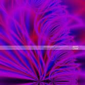 WKFR9900061-Blüten-im-Wind.jpg