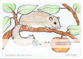 Die Postkarte zum Ausmalen; Postkarte Siebenschläfer. Der Siebenschläfer ist ein seltener, scheuer Bewohner des Felsengebirges. Das Motiv ist durch die großen Flächen besonders für die jüngeren, wenig erfahrenen Zeichner geeignet.