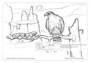 Die Postkarte zum Ausmalen; Postkarte Brosinnadel. Beliebtes Motiv, das mit Falke, markanten Felsgebilden (Brosinnadel und Falkenstein im Hintergrund) und Kiefer drei typische Merkmale von Natur und Landschaft der Sächsischen Schweiz vereint.
