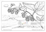 Die Postkarte zum Ausmalen; Postkarte Elbbogen am Lilienstein. Nicht nur Fels und Wald gibt es zu beobachten. Was wächst am Wegrand, was krabbelt und fliegt umher? Sind die Beeren schon so reif, dass man sie essen kann? Welche Farbe haben sie dann? Und was gibt es auf der Elbe zu sehen?
